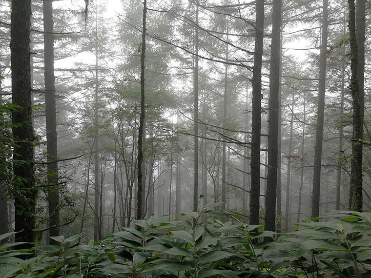 霧がかった桂小場