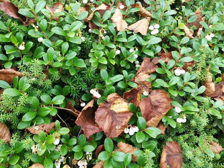 桂小場の植物